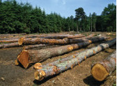 Serviciul 112 pentru transporturile ilegale de lemn