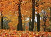 Luna lemnului, intre 26 septembrie si 31 octombrie 2014