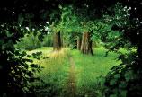 Aproape 64.000 de hectare de padure din judetul Buzau au ramas in proprietatea statului roman