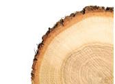 Peste 3.500 de reprezentanti ai asociatiilor profesionale din domeniul forestier au protestat in fata guvernului