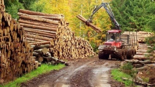Transportul ilegal de lemn se sanctioneaza cu amenzi crescute chiar si de 10 ori