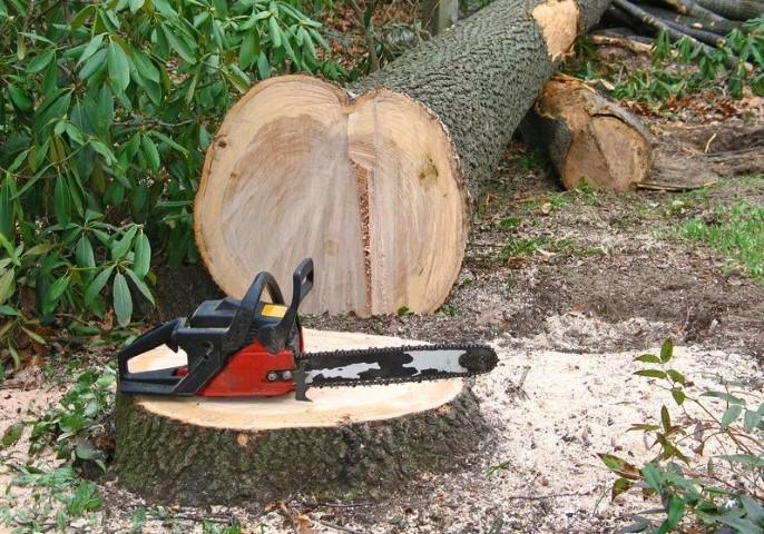 Legislatia lemnului e pe calea cea buna pentru o exploatare sustenabila ?