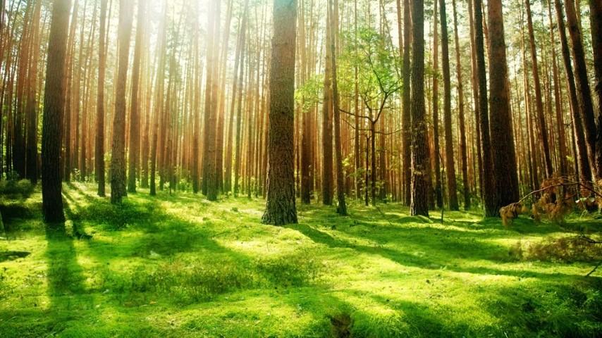 Peste 24.000 de hectare de paduri din Romania au intrat in patrimoniul UNESCO