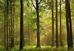 Exploatarea forestiera este la minimele istorice in Elvetia