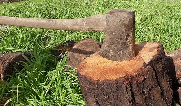 Studiu SUA - cresterea de 12% a suprafetelor impadurite datorita industriei lemnului