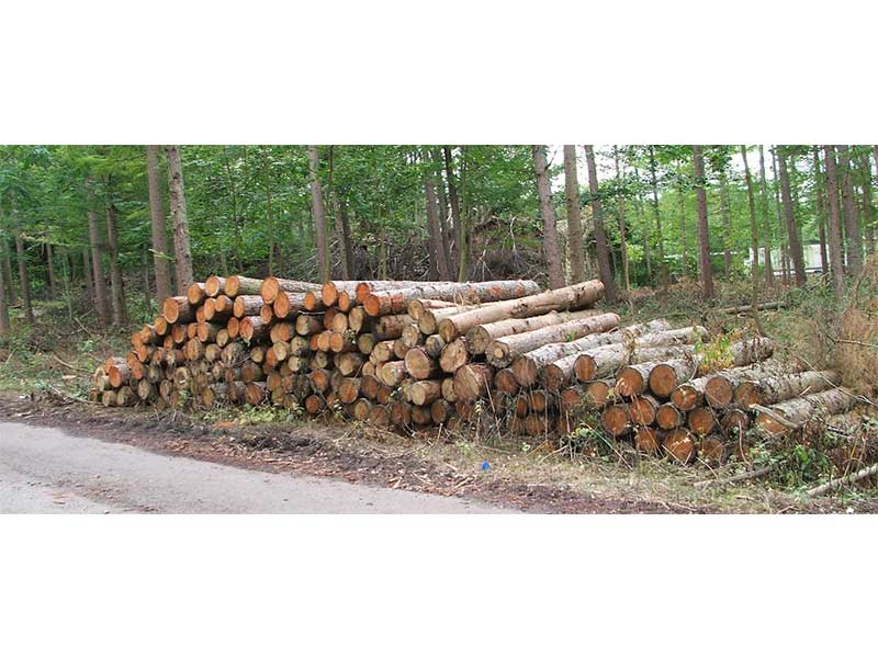 The Brazilian timber market and wooden products tend to increase