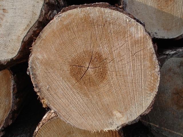 In Brasile, il mercato di legno e dei prodotti in legno è in crescita