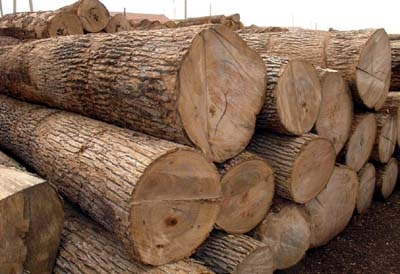 Despite Ban Millions in Timber Continue to Cross Border