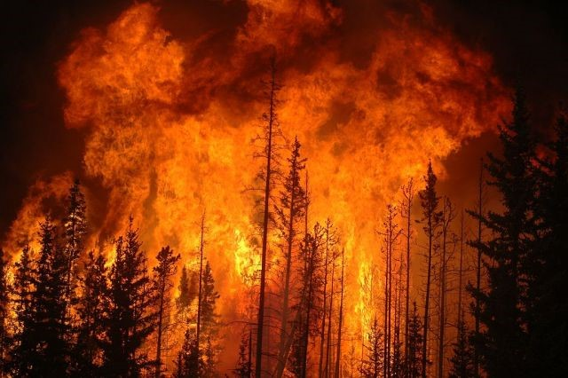 Brunell - Big fires increasing prices for lumber