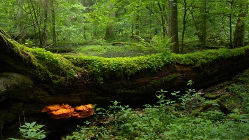 8,2 milioane de metri cubi de lemn din 45.000 de hectare au fost pusi la pamant de furtuni in Polonia
