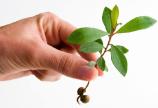 Sute de voluntari au plantat in Timisoara 3000 de copaci