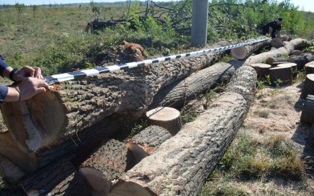Carute si autovechicule pline cu lemn furat, descoperite de politistii din Salaj