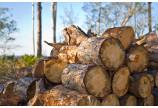Bilantul pe 2017 in ceea ce priveste cantitatile de lemn confiscate in Mures