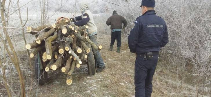 Hotii de lemne iau in gluma amenzile