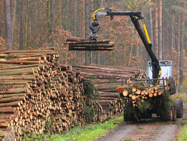 Unde a condus scumpirea lemnelor de foc