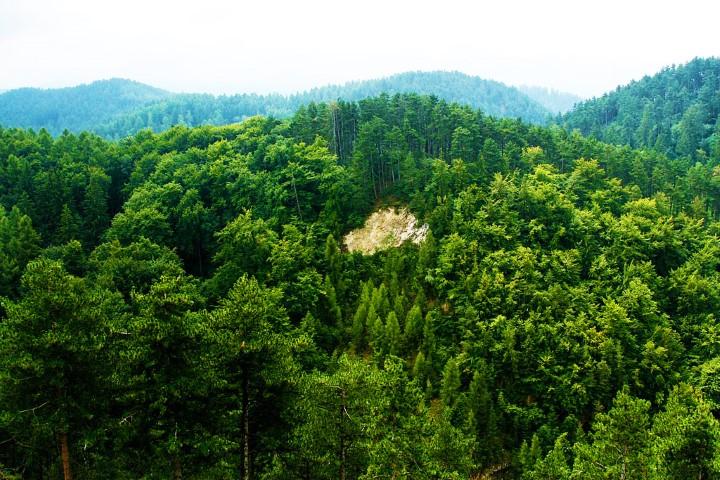 Controverse in ceea ce priveste lemnul de foc in Romania