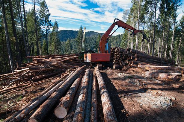 Poland must stop the logging immediately