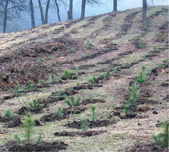 In 2017, Romsiva a plantat puieti forestieri cu 8% peste programul anual prestabilit