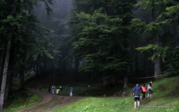Autoritatile vor sa taie padurea din Sarmisegetuza Regia, intinsa pe mai mult de 17 hectare