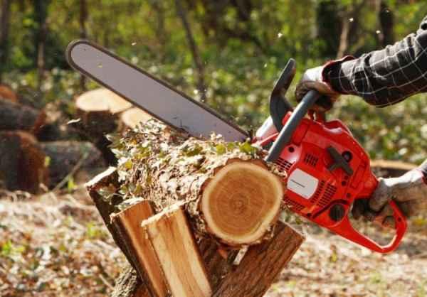 Ucis de un copac, in timp ce aduna lemne pe raza unui ocol silvic