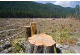Proprietarii de paduri risca sa fie batuti pe propriile terenuri