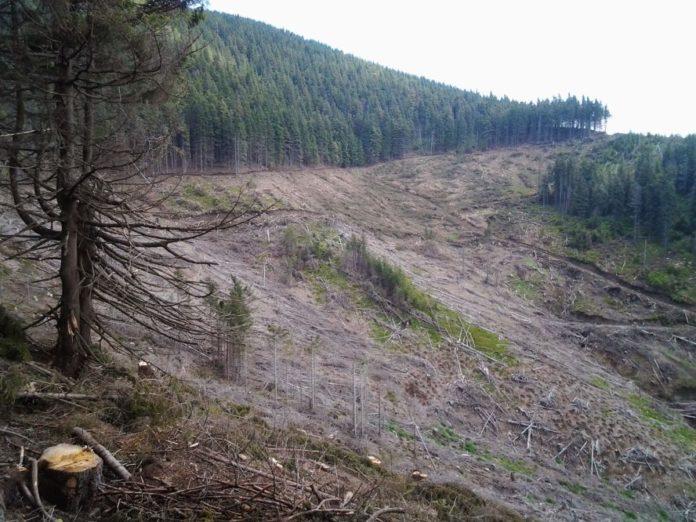 Maramuresul - in topul judetelor in care mafia lemnului este de neoprit