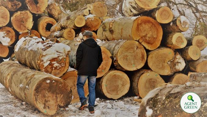 Arbori uriasi sunt prabusiti peste cetatea Sarmisegetuza, monument UNESCO