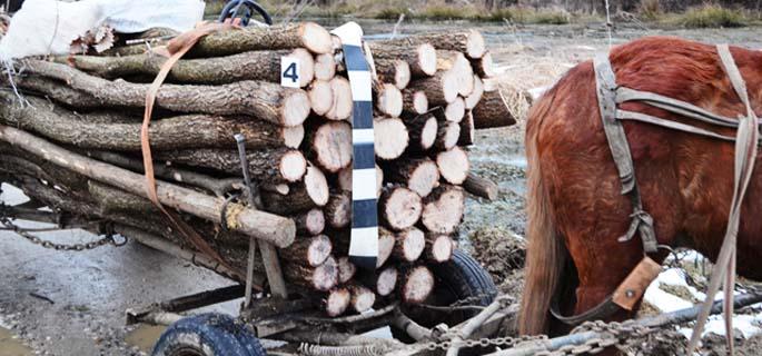 De ce marile jafuri de lemne nu sunt depistate la fel de repede, precum cele minore?