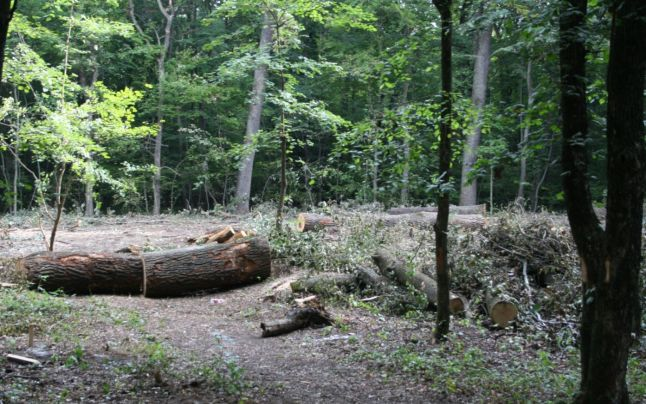 Cum a disparut lemnul taiat din evidentele Consiliului Judetean?