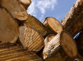 O noua metoda de masurare a masei lemnoase- promovata de 2 studenti