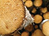 In timp ce exporturile de lemn si pluta scad, importurile cresc