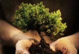 Suprafetele de paduri sunt in expansiune in tarile bogate ale lumii