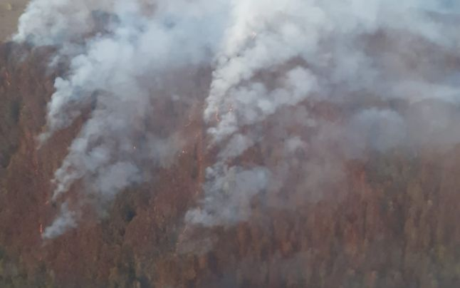 3 hectare de padure au ars