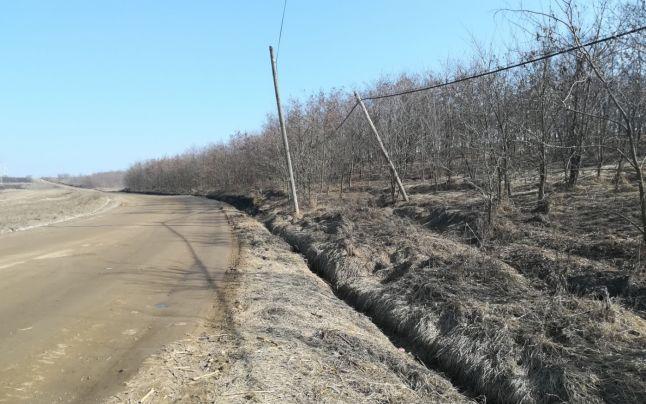 Asistatii sociali au plantat zeci de hectare de padure