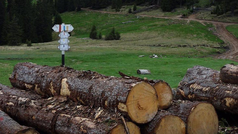 Echipa Netflix, agresata de taietorii de lemne din Romania in timp ce filma un documentar