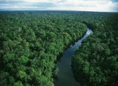 Brazilia: defrisari record in padurea amazoniana